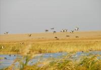 Иргиз-Тургайский резерват